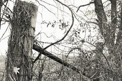 Fenced In (Dan Pahnke) Tags: pasture autumn fenceline fence fall