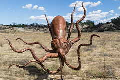21B-Borrego (Beverly Houwing) Tags: borregosprings statue metal sculpture ricardobreceda desert artwork animal giantsquid tentacles
