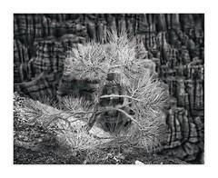 Inspiration Point, Bryce Canyon National Park, UT, #268 (Vincent Galassi) Tags: lasvegas nevada usa 268 inspirationpoint brycecanyonnationalpark ut black white landscape park bryce canyon inspiration point