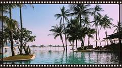 15354093_1224491864255612_1878402508_o(1) (bathena_97) Tags: thailande vacance plage mer piscine eau palmier arbre plante nature fleur ciel bleu mauve soleil