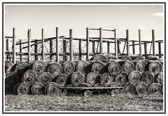 harvest is over (TAC.Photography) Tags: blackandwhite farmscene haybales wagon farmwagon stackedhay harvest