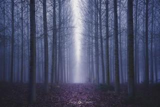 Nudes between darkness
