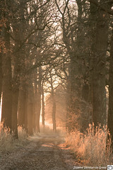 DN9A9342-2 (Josette Veltman) Tags: sunrise zonsopkomst salland overijssel soeslo zwolle landschap natuur landscape nature netherlands