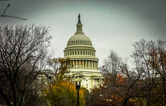 2016.11.30 DC People and Places with a Sony A7sII 09036 (tedeytan) Tags: capitoldome dc sonya7sii washington dcist uscapitol exif:model=ilce7sm2 exif:aperture=56 camera:make=sony exif:isospeed=100 exif:lens=fe2470mmf4zaoss exif:make=sony camera:model=ilce7sm2 exif:focallength=70mm
