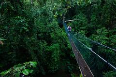 Canopy Walk (Bryn Tassell) Tags: borneo jungle mala malaysia mulu tropical canopy walk miri sarawak nationalpark national park