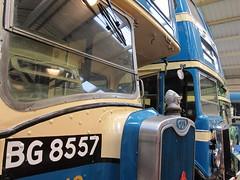 Birkenhead Blues (Lady Wulfrun) Tags: blue bus guy museum corporation birkenhead 105 leyland 242 merseyside guyarab birkenheadtransport bg8557