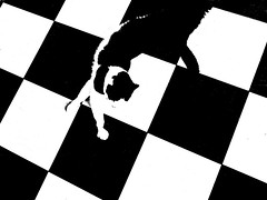 Cat on the Tiles (ronramstew) Tags: blackandwhite bw cat tiles 1001nights checkerboard