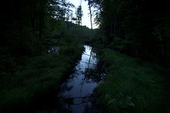 stream (Mustekala5) Tags: fern tree silhouette forest dark landscape dawn nikon stream shadows tokina swamp grasses
