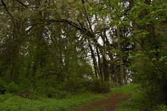 Corban University Hiking Trail, Salem, Oregon (Anna Calvert Photography) Tags: school trees green nature oregon forest moss spring unitedstates hike bushwalking environment salem ferns pathways hikingtrail corbanuniversity