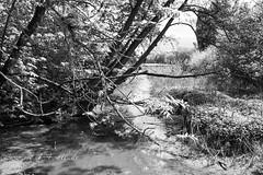 Bach (my14all) Tags: landscape blackwhite bach schwarzweis wolkenlandschaft