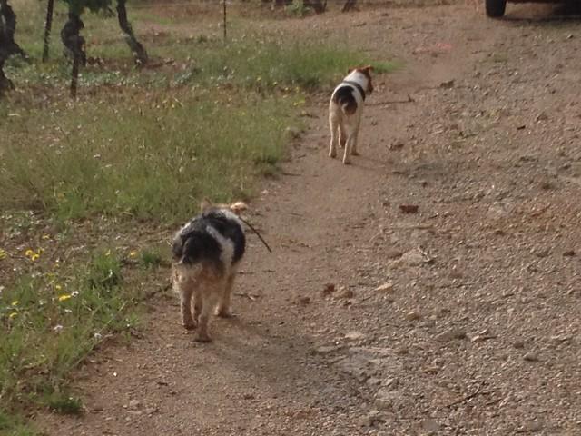 Après une première sortie, les fox cherchent une nouvelle piste