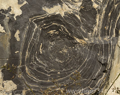 """Stromatolite • <a style=""""font-size:0.8em;"""" href=""""http://www.flickr.com/photos/63501323@N07/14719462528/"""" target=""""_blank"""">View on Flickr</a>"""