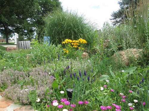 Photo - Tantra flower bed adpoted by Milo Construction
