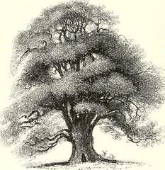 Anglų lietuvių žodynas. Žodis quercus sessiliflora reiškia <li>quercus sessiliflora</li> lietuviškai.