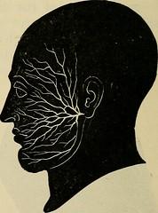 Anglų lietuvių žodynas. Žodis sciatic reiškia a anat. sėdimasis, sėdmens; sciatic nerve sėdmens nervas lietuviškai.