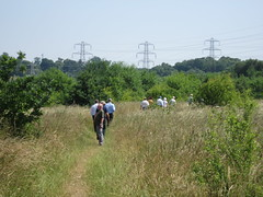 Guided walk around Kiln Meadow