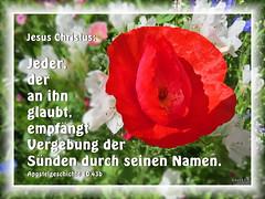 Worte zum Leben / Words to life (16/19) (Martin Volpert) Tags: flower fleur flor pflanze christian bible blomma christianity blume bibbia fiore blte blomst bibel virg lore biblia bloem blm iek floro kwiat flos ciuri bijbel kvet kukka cvijet flouer glauben christentum blth jesuschristus cvet zieds is floare blome iedas bibelverskarte mavo43 christianesimo wortezumleben wordstolife