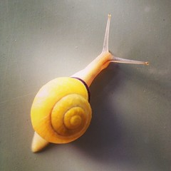 Seemed to be a #good #morning... (Parallel_Dreams) Tags: morning nature animal garden botanical university slow good natur uni snails mainz garten schnecke tier universit botanischer langsam uploaded:by=flickstagram instagram:photo=7903073666261289961182947044 instagram:venuename=botanischergartenmainz instagram:venue=251519637