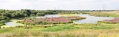 North Lake at Beddington Farmlands, by Peter Alfrey