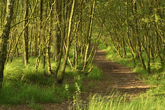 Cannock Chase, Cannock 21/06/2014 (Gary S. Crutchley) Tags: uk travel england west green nature rural forest evening nikon raw britain united great kingdom cannock chase nikkor staffordshire westmidlands vr afs midlands d800 ifed 24120mm f3556