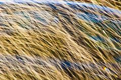 RISCOS DE GUA -  (50) (ALEXANDRE SAMPAIO) Tags: light luz gua brasil cores arte amor natureza paz vida contraste beleza fotografia formas desenhos franca cor fantstico aura desenho espao deus experimento criao energia iluminao geometria realidade universo irreal composio multiplicidade imaginao divino esttica delicadeza sensibilidade pontodevista manchas possibilidade experimentao invisvel possibilidades fragilidade visvel transcendncia irrealidade alexandresampaio riscosdegua