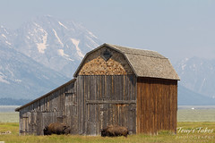 T. A. Moulton's barn is scene with the Grand Tetons in the background