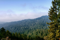 Muir Woods Overlook (Spiff11) Tags: slr nature canon marin muirwoods 1740mm hdr 2014