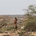 Somali Shepherd