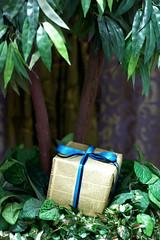 (ولاء المصيلحي   Walaa AbdulAziz) Tags: blue tree green gift عبد أزرق العزيز هدية شجر أخضر بني ولاء المصيلحي