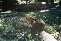 「想幹嘛?」 (YL.H) Tags: park cat taiwan taipei 台北 貓 公園 straycats analogy 流浪貓 straykitten 街貓 南京東路 慶城街 慶城公園