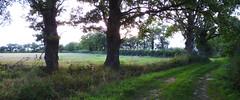 les chemins dans le bocage du Boischaut - Cher - Berry - Centre - France (vanaspati1) Tags: trees france nature les berry centre du arbres le cher paysage sentier chemin dans fougres vgtation bocage chemins gramines haies boischaut vanaspati1