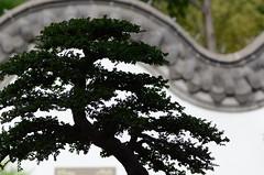 DSC_0669a (Fransois) Tags: backlight garden montréal bokeh chinese jardin bonsai chinois contrejour bonzaï