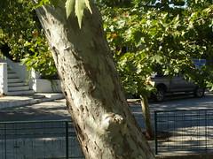 (Psinthos.Net) Tags: road autumn cars afternoon september sidewalk treetrunk trunk greenery planetrees railings planetree  setps psinthos