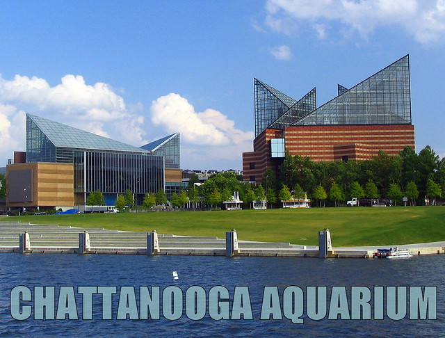 Things for Sale: Post Card: Chattanooga Aquarium