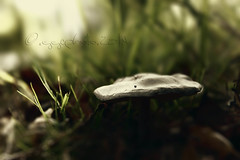 """""""She left pieces of her life behind her everywhere she went. It's easier to feel the sunlight without them, she said."""" (ggcphoto) Tags: blur green mushroom grass closeup ground microcosmos storypeople 550mm canoneos600d eosrebelt3i brianandreasquotes"""