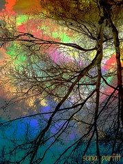 colored reflection (Sonja Parfitt) Tags: trees color reflection water manipulated