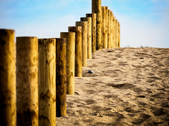 Wood piles on sand