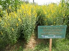 Biodea Fertilizer - journey to Africa (biodea_fertilizers) Tags: biofertilizer biodea primavera africa journey biochar compost