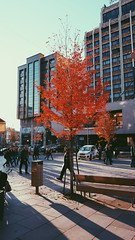 autumn. (trimkabashi) Tags: kosova kosovo prishtina pristina autumn fall leaves tree nature city urban vsco vscocam colors architecture people life beauty light sunset sunshine sun