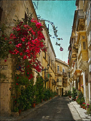 A street full of flowers (Jocelyn777) Tags: malta 3cities birgu vittorioso plants streets historictowns buildings architecture travel textured