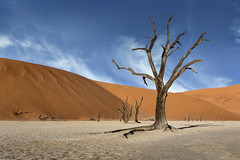 Sink Your Roots into the Ground and Stand Proud (SharonWellings) Tags: namibia africa sand desert dead tree skeleton sunset wood sky