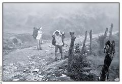 Porteurs dans la brume  Panchase Bhanjyang (2100m) (L'Abominable Homme de Rires) Tags: annapurna npal trek atalante montagne landscape montain panchase mardihimal