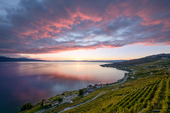 Abendstimmung (fokusblick) Tags: herbst see sonnenuntergang genfersee outdoor licht natur fujinonxf1024mmf4rois freihand abendstimmung trauben fujixt2 fuji weinberg wasser abend wolcken laclman lakegeneva autumn bunch evening eveningambiance fall freehand grapes handsfree lake light nature sea sundown sunset water puidoux vaud schweiz ch