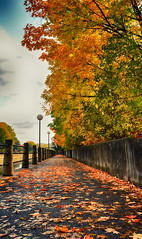 By the Canal (flashfix) Tags: october182016 2016 2016inphotos nikond7000 nikon ottawa ontario canada 40mm autumn canal fall leaves leaf orange yellow green bright lines walkway sidewalk panorama