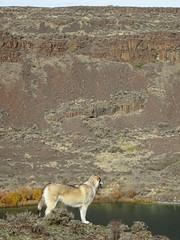 Beautiful wolfdog (YutahtheWolamute) Tags: optoutside wolfdogs wolamute yutah yutahsadventures deeplake dryfalls dogs hiking fall publiclands