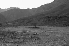 Ones destination is never a place, but a new way of seeing things ... (EHA73) Tags: aposummicronm1250asph leica leicamm blackandwhite bw hatta dubai mountain trees uae