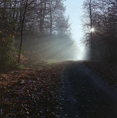 (xbacksteinx) Tags: hasselblad2000fcw 120 mediumformat analog zeiss80mmf28 planar 80mm film fuji c41 fujipro400h fall autumn sunrise november mist misty woods forest path track light backlight mood moody