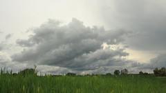 Kzeledik a vihar / The storm is coming (bencze82) Tags: voigtlnder colorskopar slii 20 mm f35 canon eos 700d kzeledik vihar the storm is coming felhk clouds hvzgyrk magyarorszg hungary