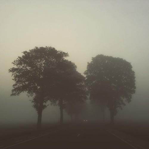 #lowvisibility #foggymorning #caminoallaburo #arboles #arbre