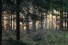 Backlighting - Olympus PEN-F (Andreas Voegele) Tags: olympus olympuspenf penf pen andreasvoegelephoto sun light color forest trees autumn search backlighting wald licht landscape samyang
